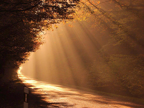 [Photo of sunlight shining on a path]