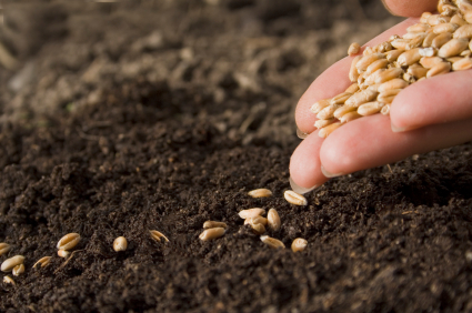 [Photo of a hand holding seeds above the soil]